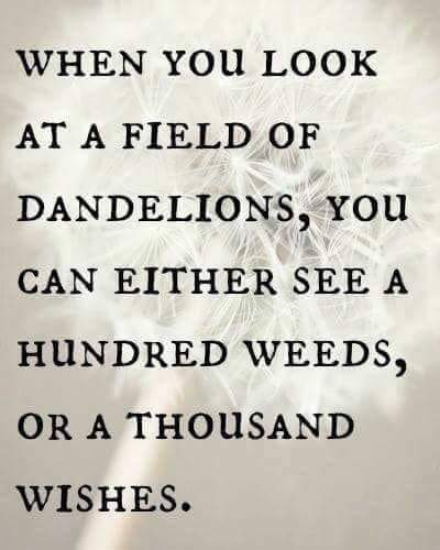 When you look at a field of dandelions, you can either see a hundred weeds or a thousand wishes.